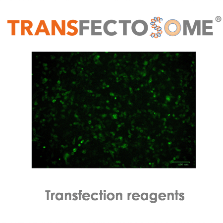 Transfectosomes